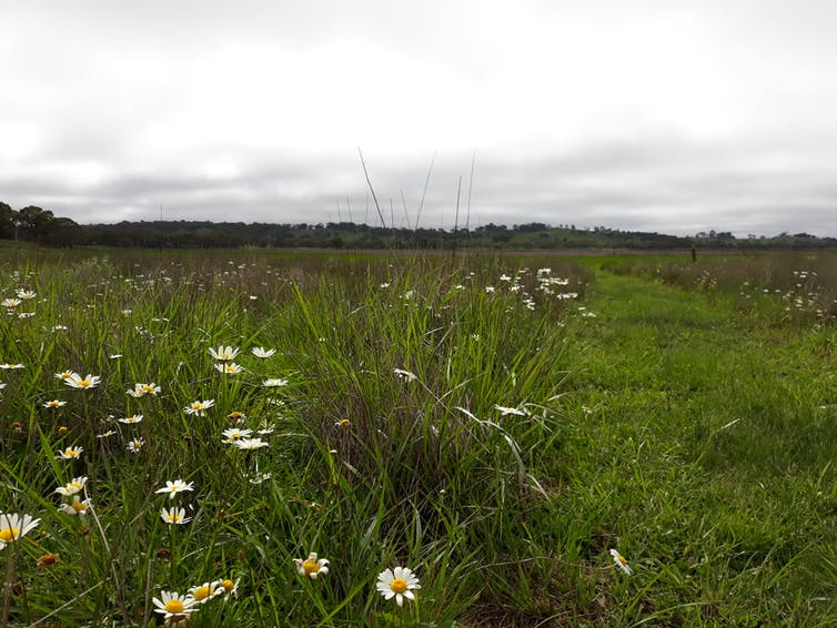 Wildflowers strewn across a dry lagoon on a cloudy day