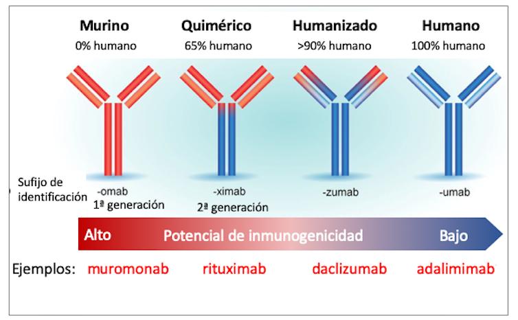 Figura 3. Tipos de anticuerpos monoclonales y ejemplos de fármacos aprobados.Adaptado de Foltz (2013) por Mercedes Jiménez,Author provided