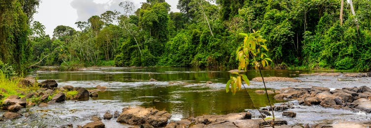 River flows through a rainforest
