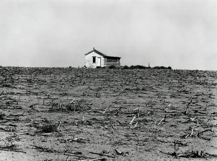Black-and-white photo of dusty field full of dead corn.