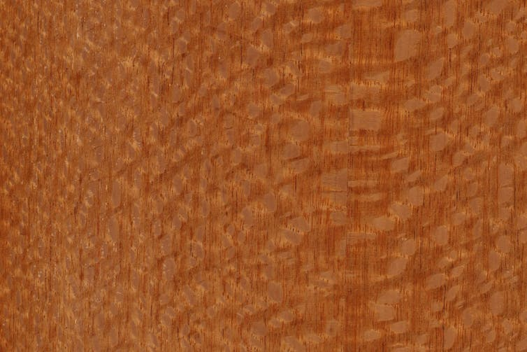 Silky oak timber