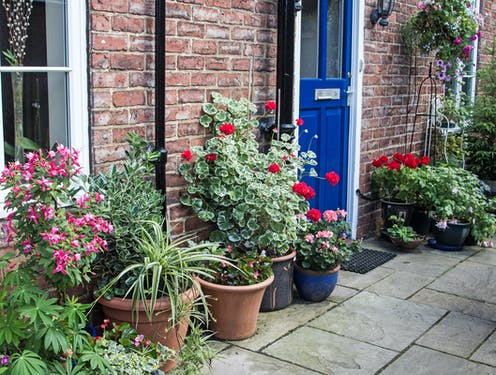 The front door of a house surrounded by potted plants on the pavement.
