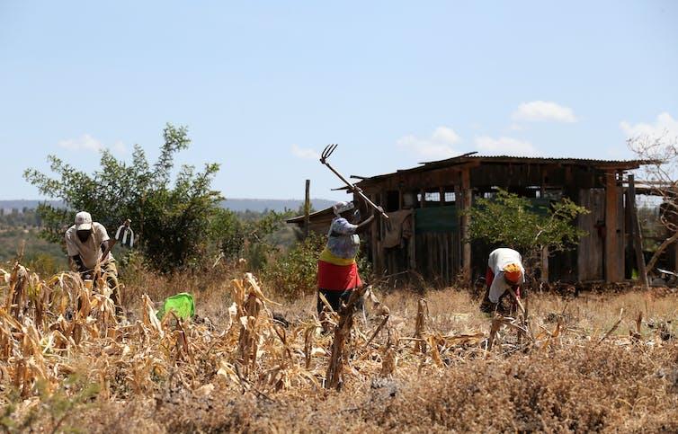 Farmers working the fields in Kenya.