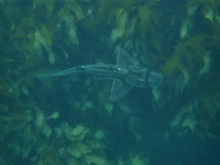 Top of a swimming shark Port acksexon