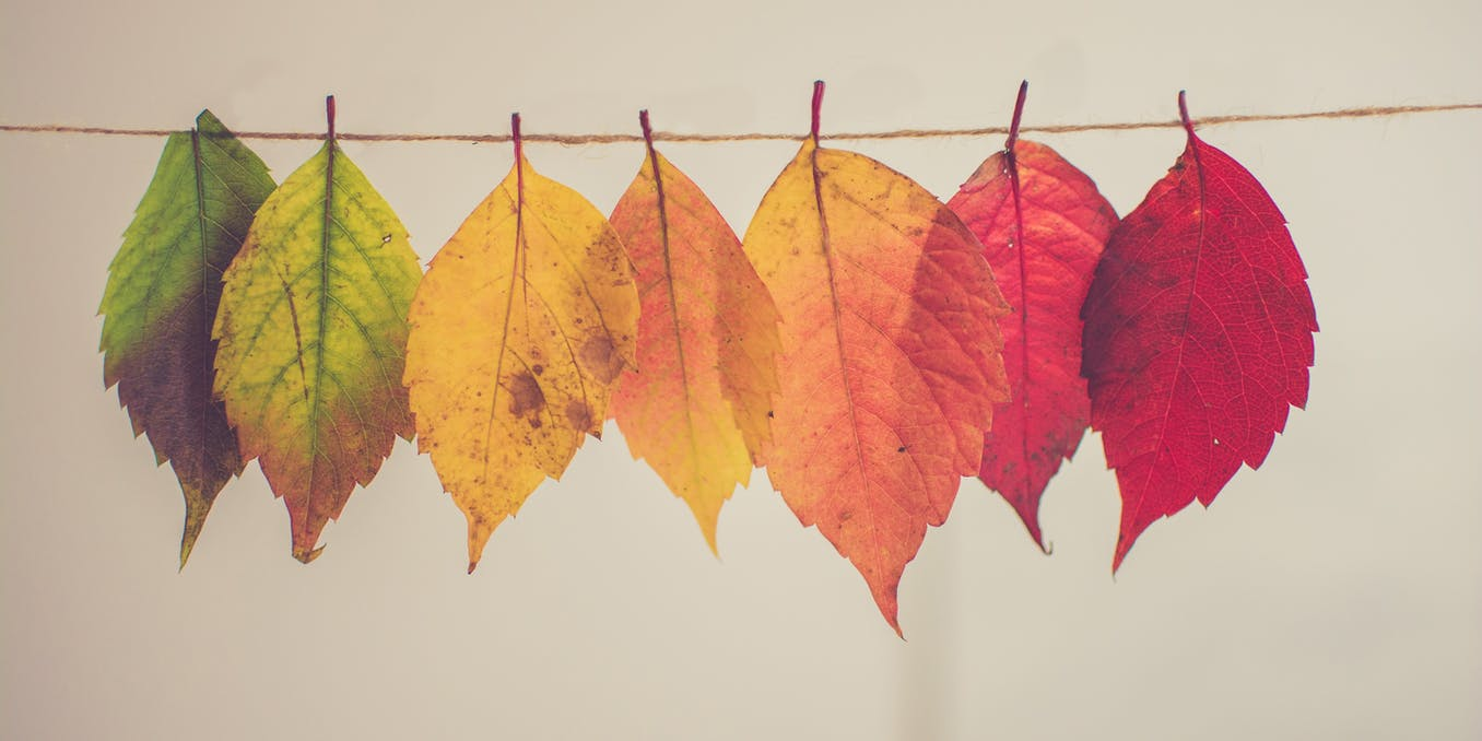 Climate change is making autumn leaves change colour earlier – here's why - The Conversation UK