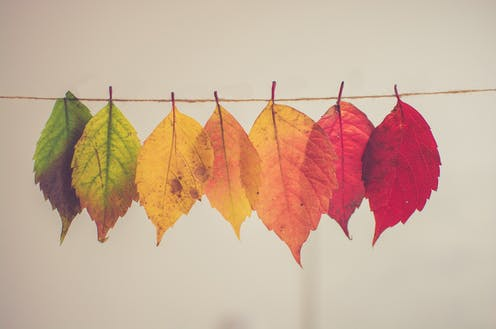 Tree leaves arranged in a line from green to red.