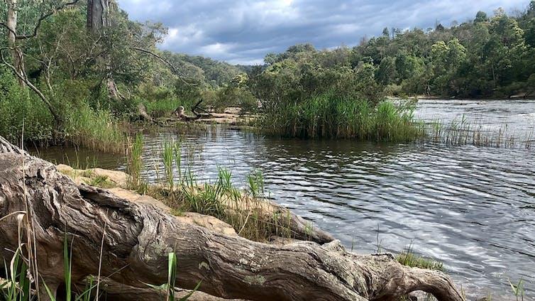 Mitchell River scene