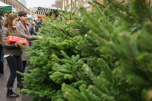 A couple look at Christmas trees in a market