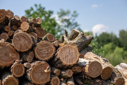 A pile of chopped firewood.