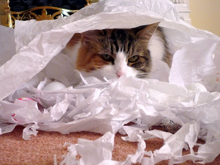A cat with shredded paper
