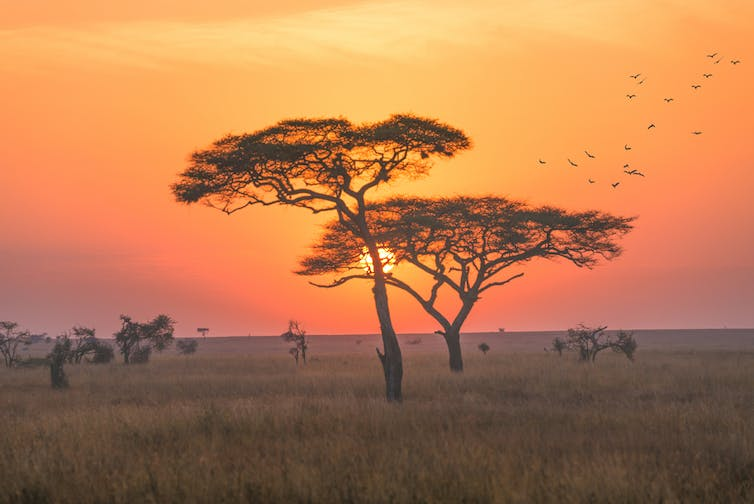 Tree silhouettes with an orange sunrise in the background.
