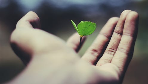 A tiny seedling is seen in someone's hand.