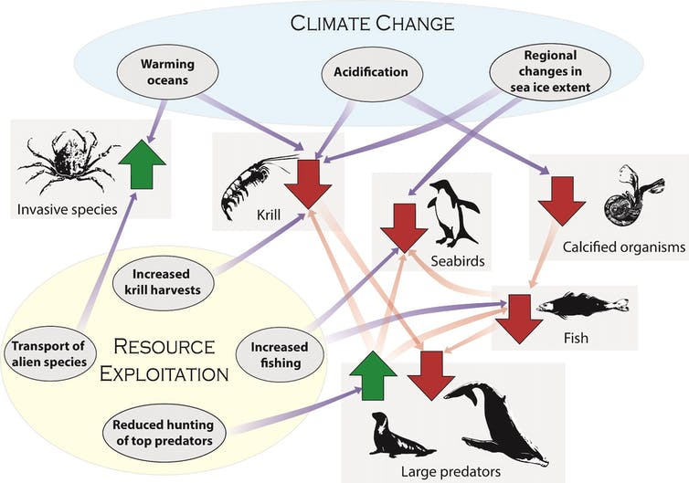 Graphic showing how people affect ecosystems in the Southern Ocean