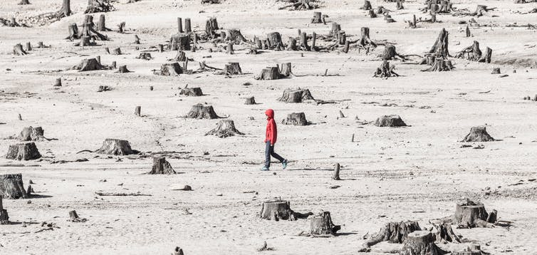 Person walking among tress stumps.