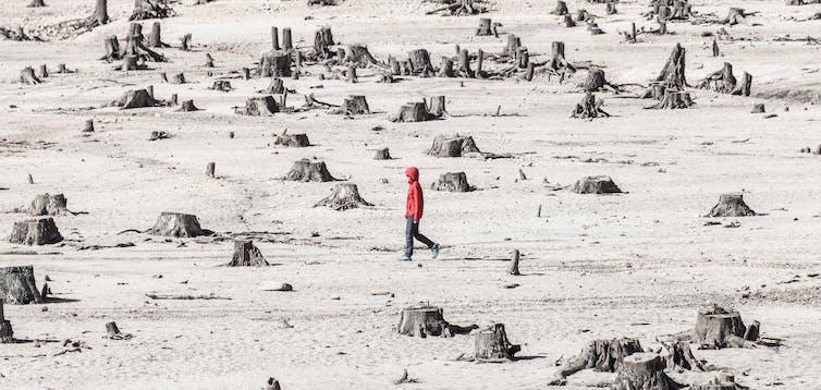 Person walking among tress stumps.