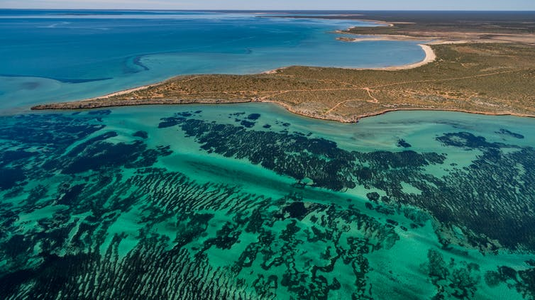 Aerial view of seagrass meadows and headlands in Shark Bay
