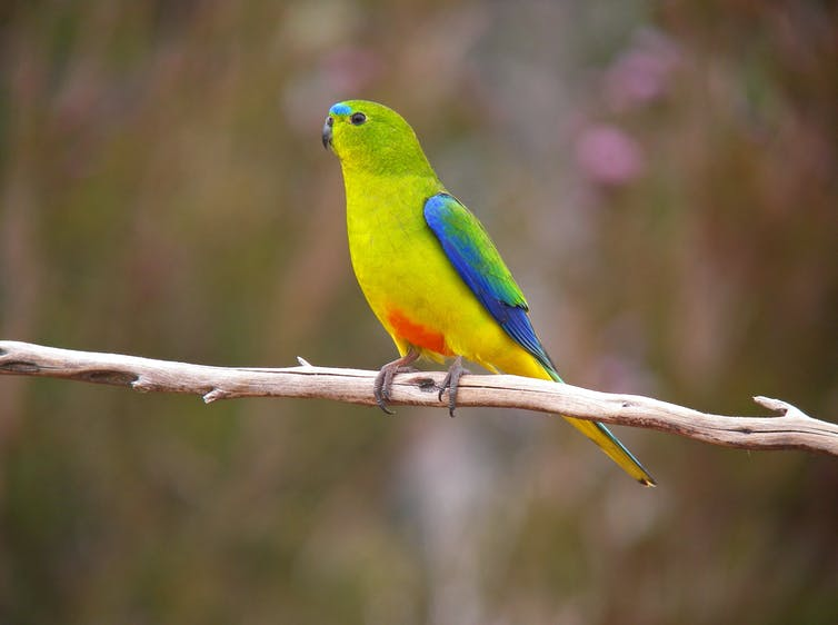 Colourful parrot on branch.