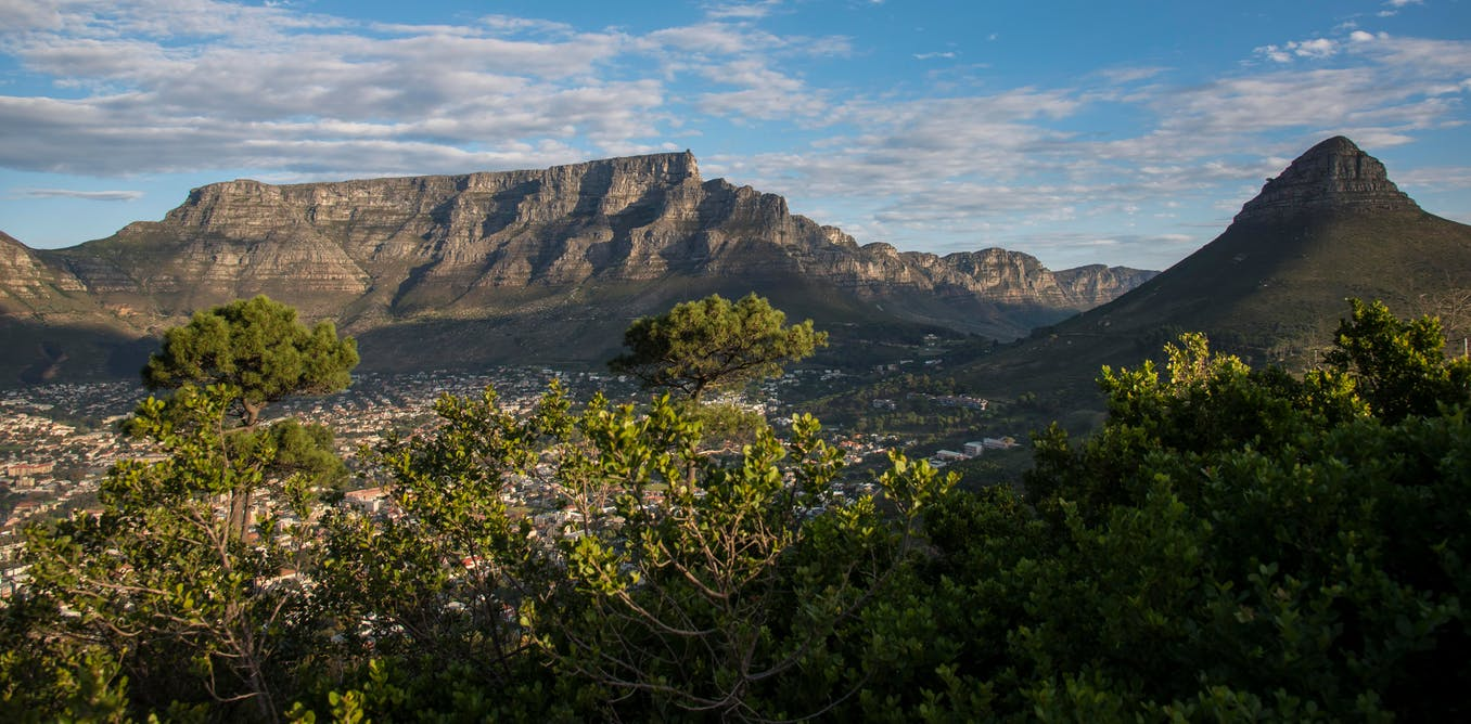 Metals from urban pollution are contaminating the last few old forests in Cape Town