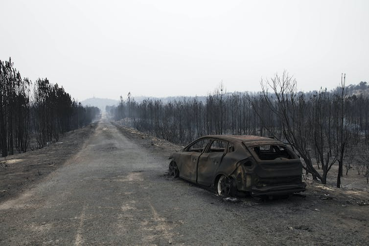 Burnt out car in burnt out forest.