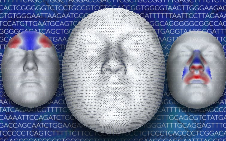How Facial Features Are Controlled by Genes.