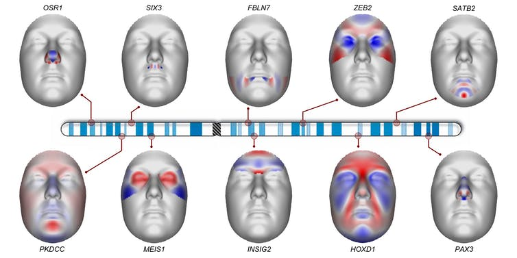 selected locations on Chromosome 2 associated with facial shape.
