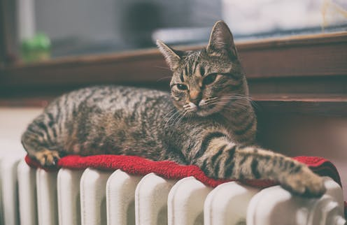 A tabby cat lies on top of a radiator.
