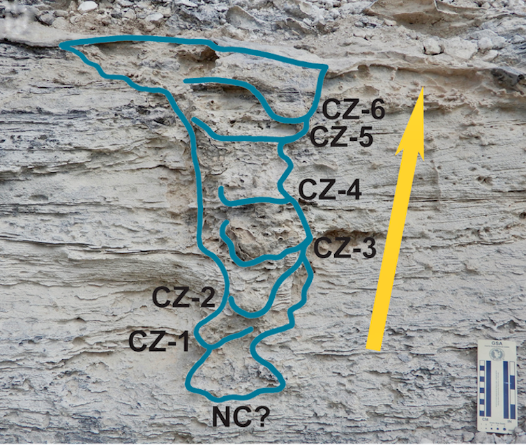 A photo of the fossil, with a drawing superimposed on top outlining the different layers.
