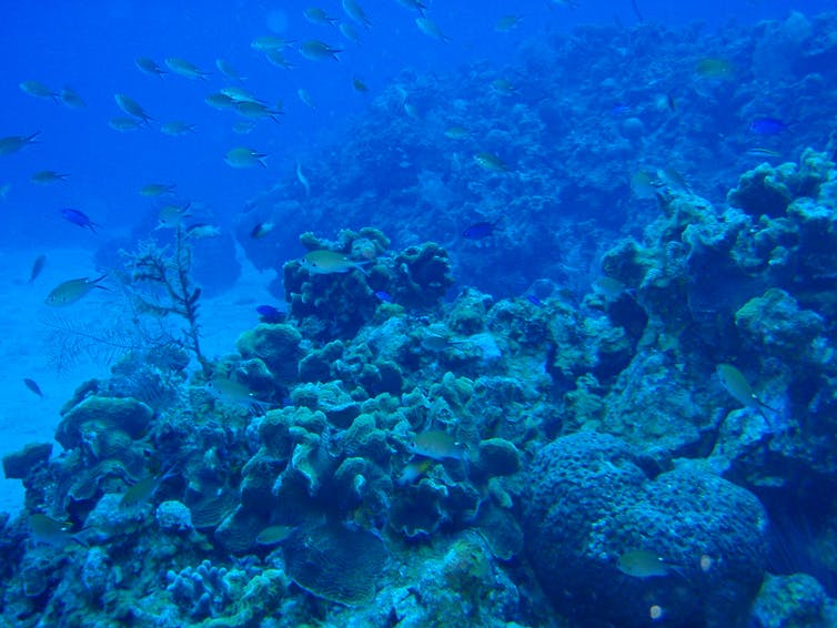 Reef in Belize