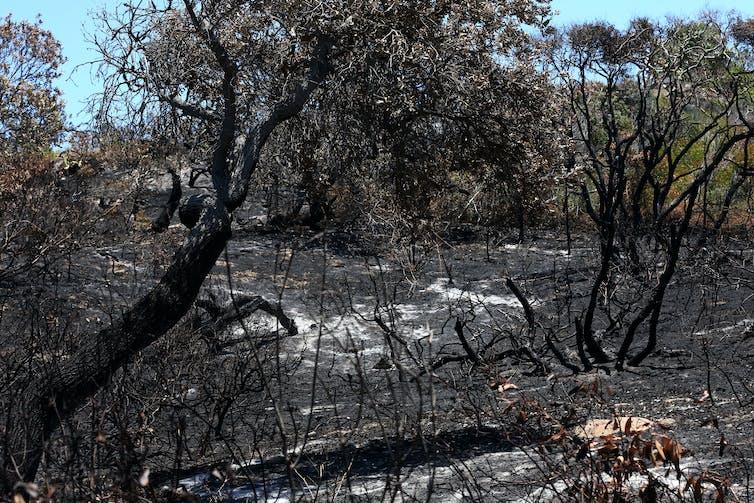 Burnt blackened bushland