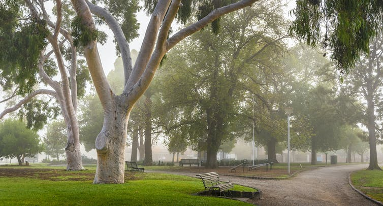 foggy morning in a Melbourne park