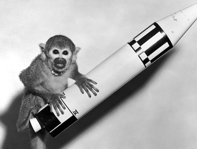 Un mono ardilla se sienta encima de un modelo de cohete.
