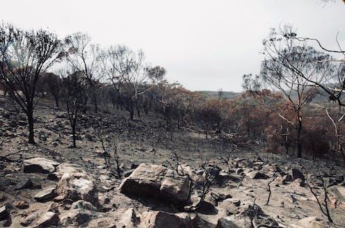Burnt Kangaroo Island landscape