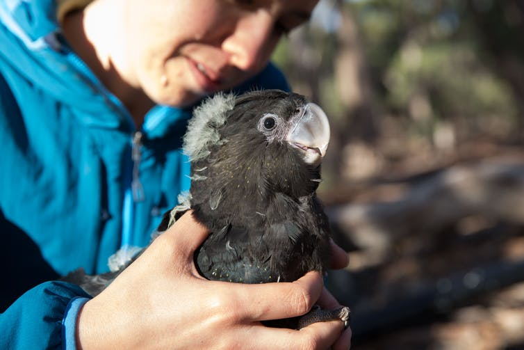The author with a nestling cockatoo