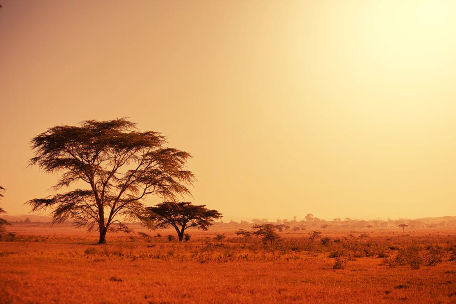 Trees on a grassland under the scorching sun.