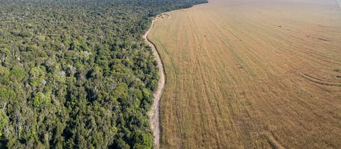 An aerial view of forest and soybean fields divided by a road.