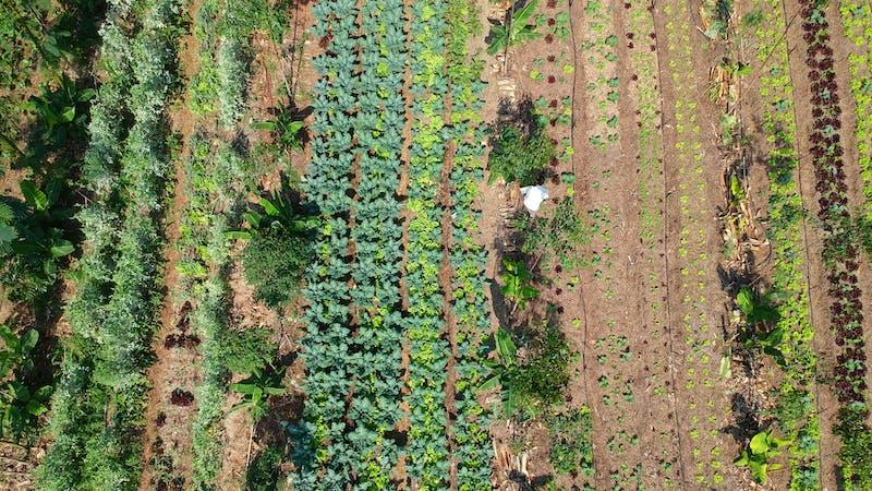 Por qué decimos agricultura ecológica cuando queremos decir agroecología