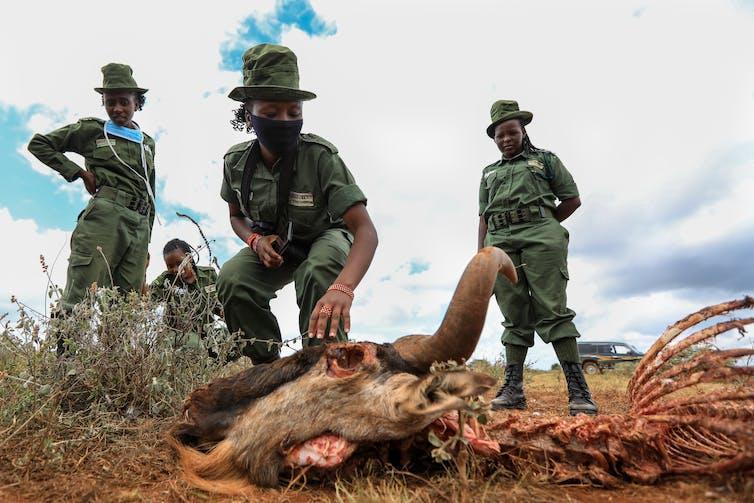 Four rangers wearing face masks inspect a wild animal carcass.