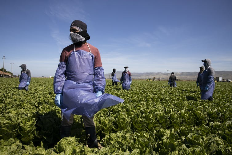 Farmworkers in a field in California.