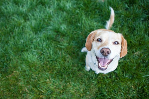 Smiley dog on grass looks up at the camera