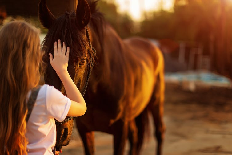 Girl pats brown horse
