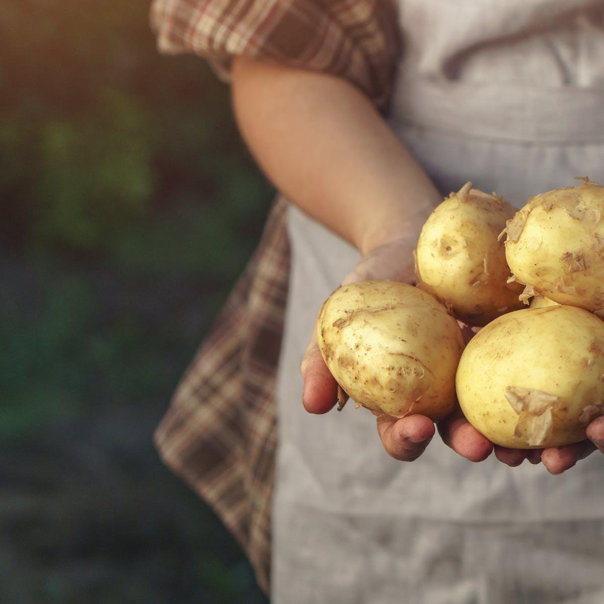 La Palabra Patata Y Lo Que Nos Cuenta Sobre Nuestra Historia