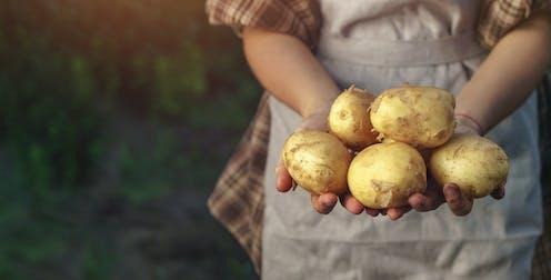 Una agricultora muestra cinco patatas en sus manos.