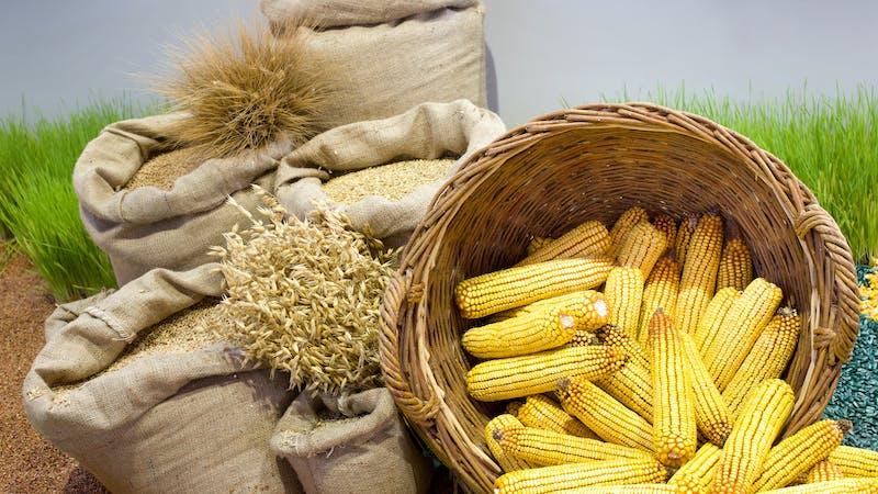 De matojos silvestres a cultivos: ¿cómo ha domesticado el hombre el trigo, el maíz y otras plantas?