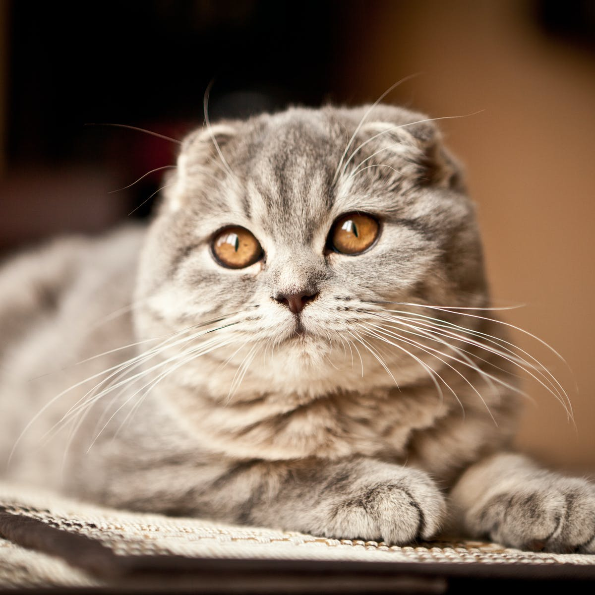 Cats With Round Faces And Big Eyes Might Be Cute But You Can T Tell How They Re Feeling New Research