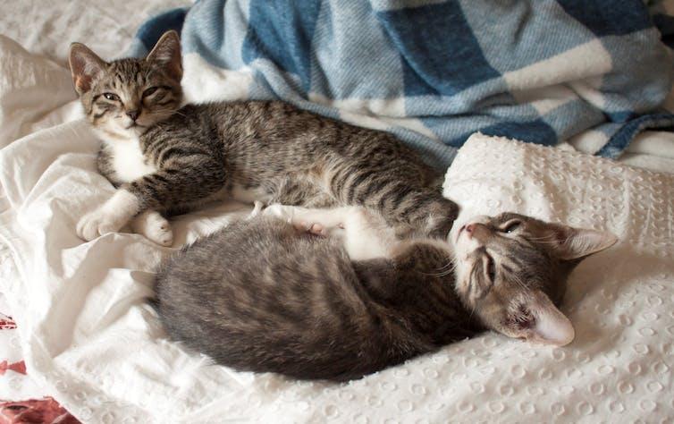 A pair of kitten siblings