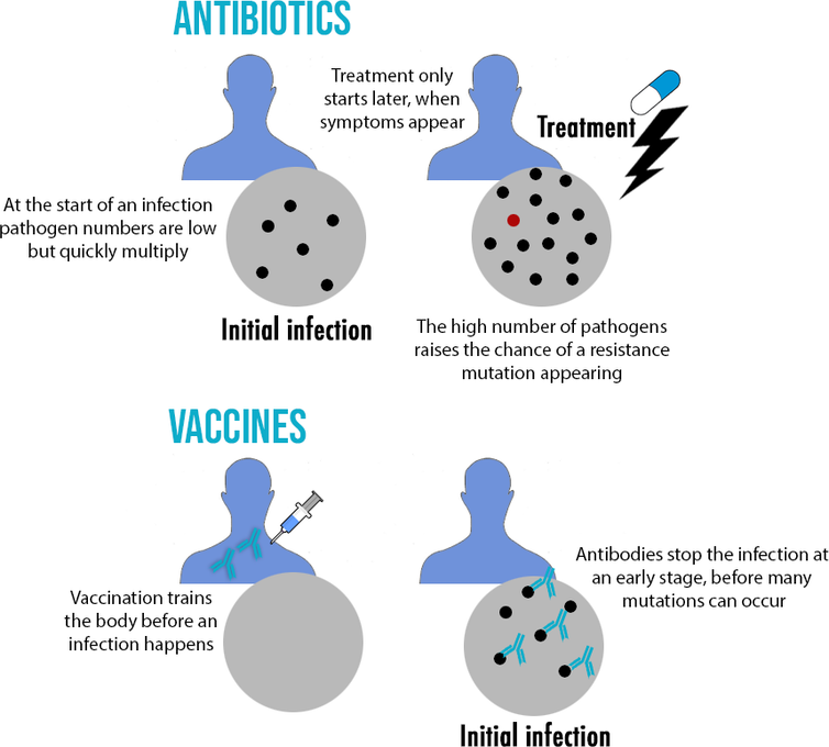 Why resistance is common in antibiotics, but rare in vaccines-4