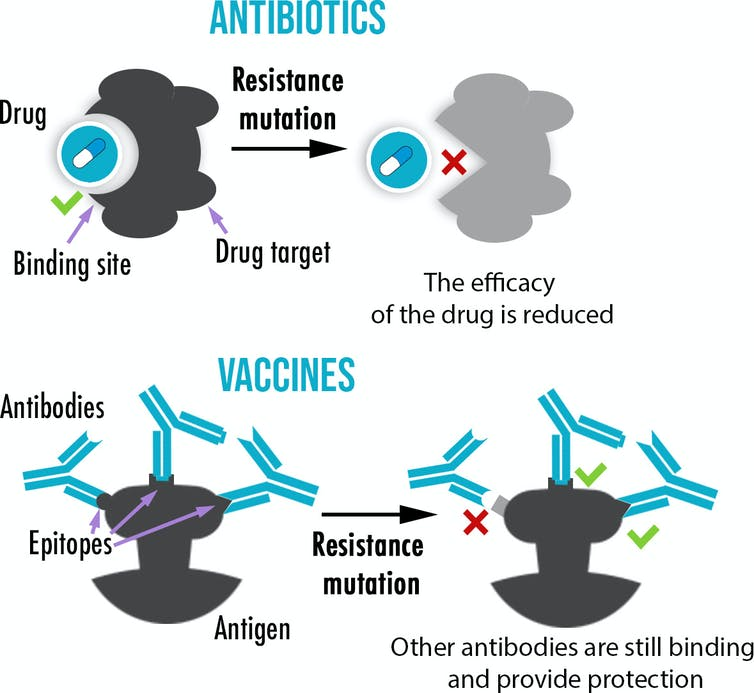Why resistance is common in antibiotics, but rare in vaccines-3