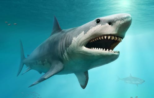 A drawing of a Megalodon