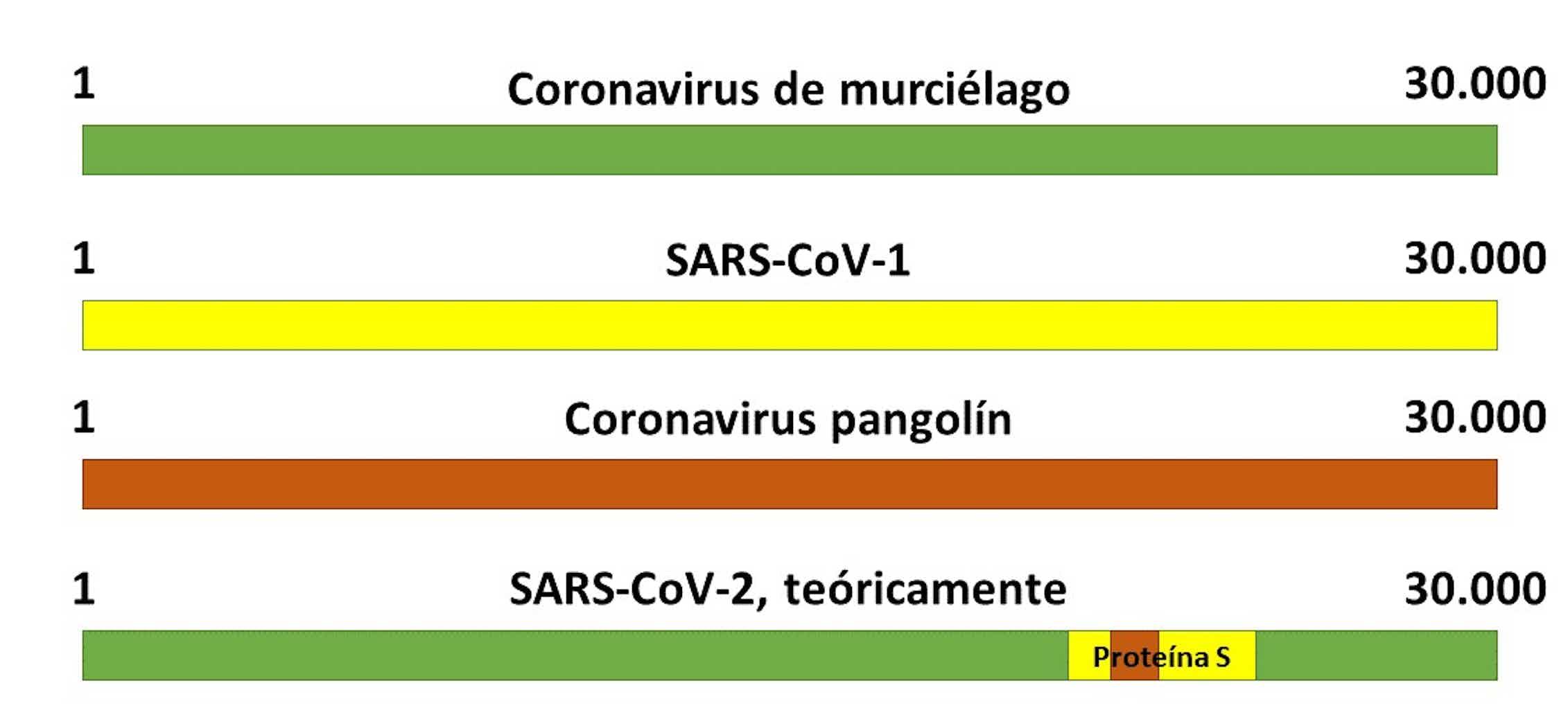 Teoría del origen del SARS-CoV-2 como virus quimérico. Elaboración propia.