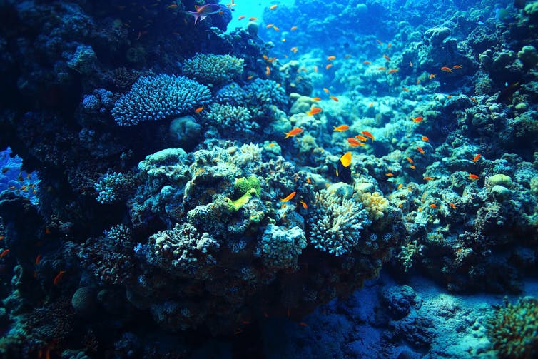 A coral reef underwater, with clown fish swimming by.